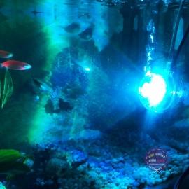 Hộp đèn LED đổi màu + Sục Khí Oxy cho hồ cá cảnh